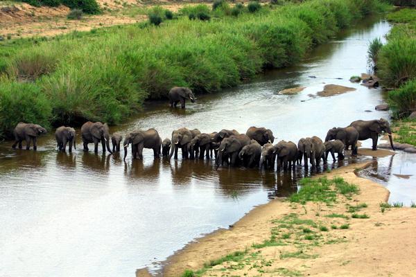 Kruger National Park. A herd of elephants at the Crocodile River in the Kruger National Park. Picture:Ian Landsberg/ANA