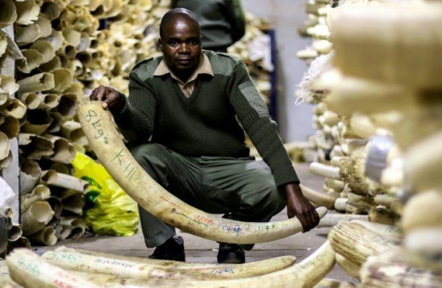 Zim's Mnangagwa blasts CITES over ivory trade ban