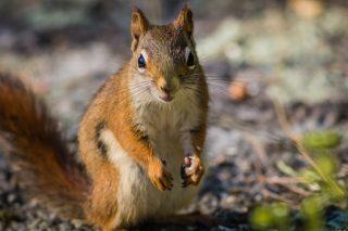 Alabama police find squirrel high on meth during raid