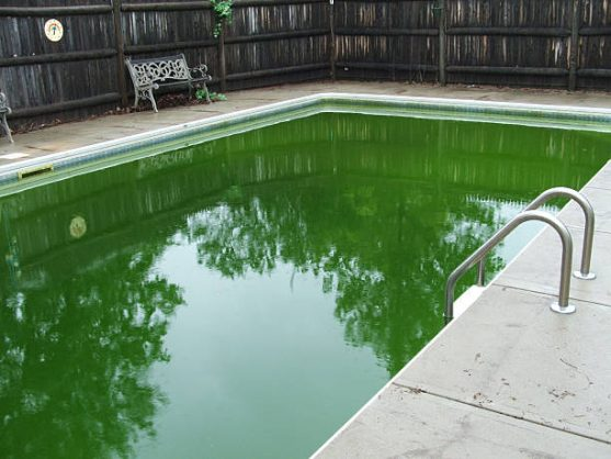 A backyard pool with algae making the water green. Picture: iStock