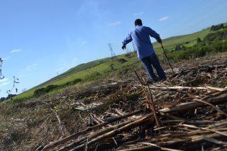 Man found burnt alive in KZN sugar cane field