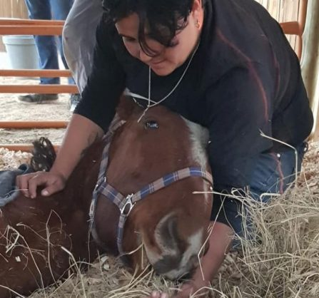 Heroes save neglected horse dumped and left for dead in Pretoria field