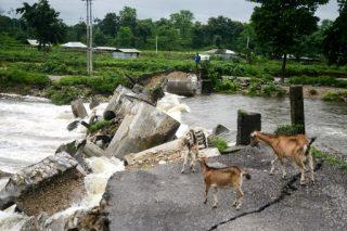 Tiger, rhinos flee to higher ground in India's flood-hit Assam