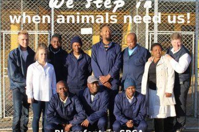 Lesotho army horses die of hunger – Bloemfontein SPCA