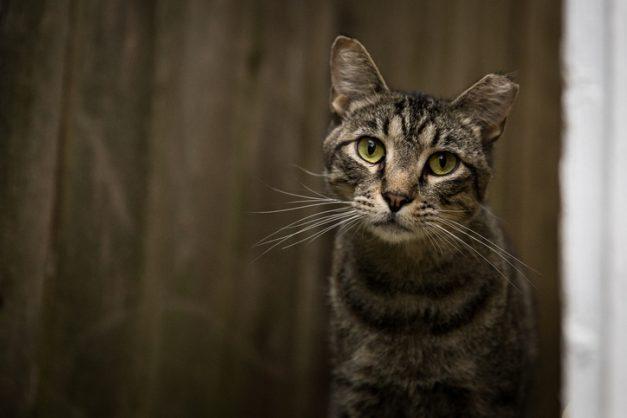 Five cats found beaten to death in Pretoria Moot