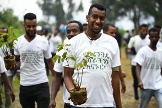 Ethiopia attempting to plant 4-billion trees