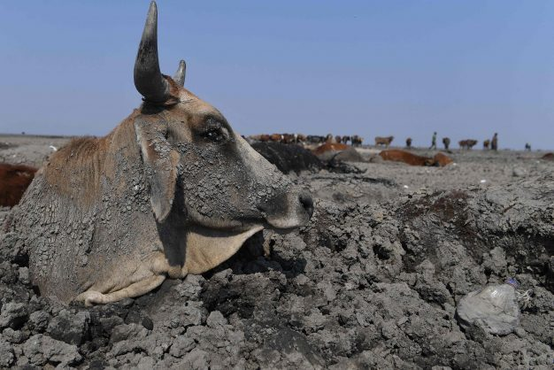 Farmers and animals struggle in drought-hit Botswana