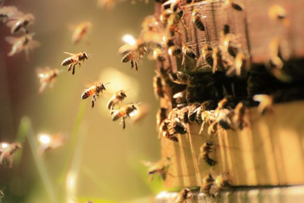 Swarm of bees attack family of 5 in Nelspruit