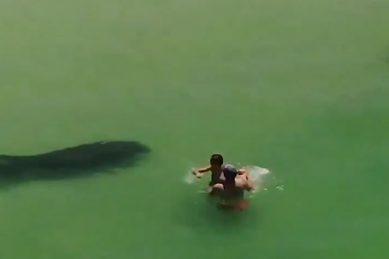 WATCH: Manatee frightens a few at the beach