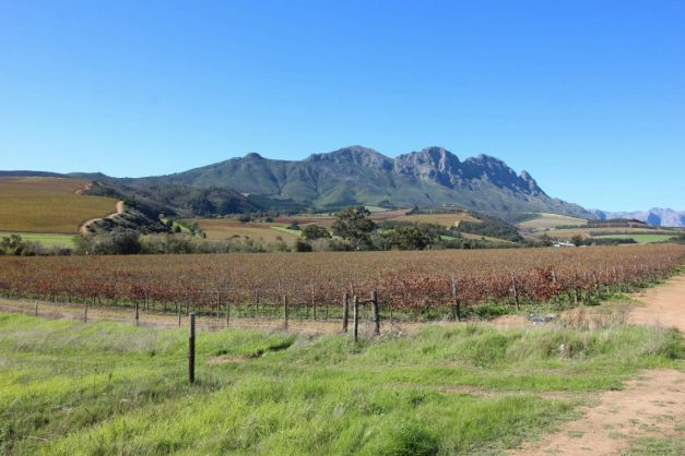 Wine farms now offer great deals, with delivery, amid Covid-19, and the harvest goes on