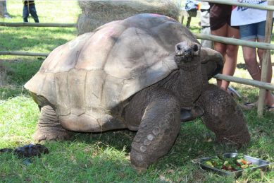 South Africa's oldest tortoise turns 109
