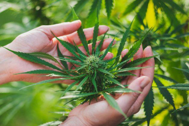 Mexico takes step towards legalising marijuana
