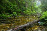 SANParks Wilderness draadjies vir swaar reën, wat Sondag oorstroom - Citizen