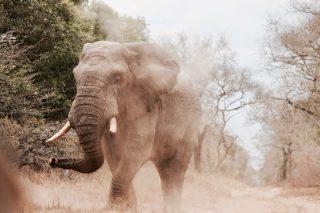 Hole in Kruger Park fence a poacher's paradise