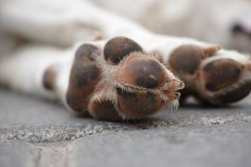 Deadly virus leaves 71 puppies dead at Pretoria police training hub