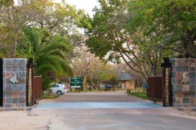 Elephant shot dead in Kruger Park staff village