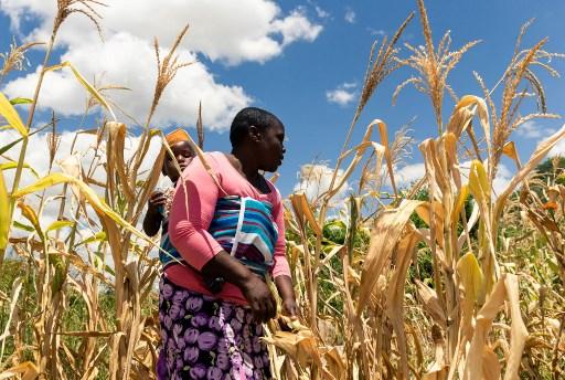 Zimbabwe facing 'man-made' starvation, UN expert warns