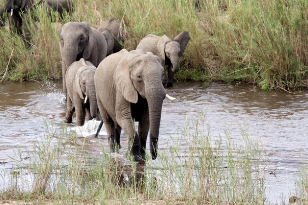 Poor water management threatens South Africa's crown jewel