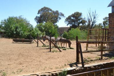 SPCA helps relocate animals after Bloemfontein Zoo closes down