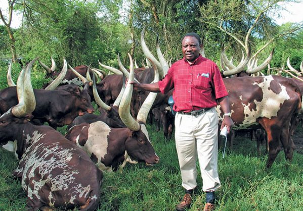 Ramaphosa Retrenches Almost Half The Staff At His Farm The