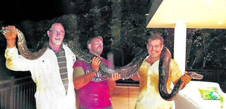 'Dream come true' for KZN snake catcher as he bags four-metre-long pregnant python