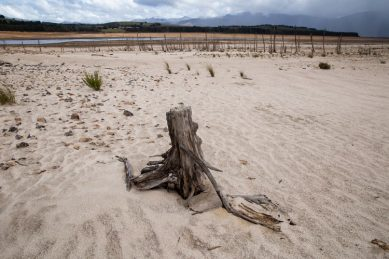 Northern Cape needs R688m to battle massive drought