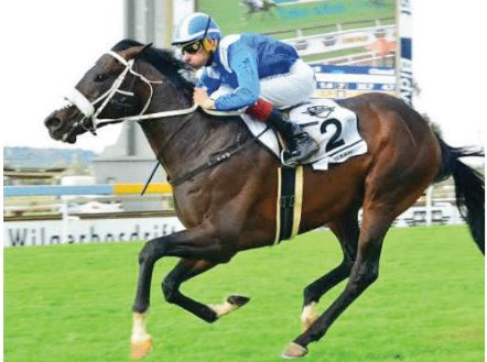Horse of the Year? Hawwaam, One World and Summer Pudding the favourites