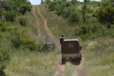 Anti-poaching efforts of Mozambique's Anac pay handsome dividends