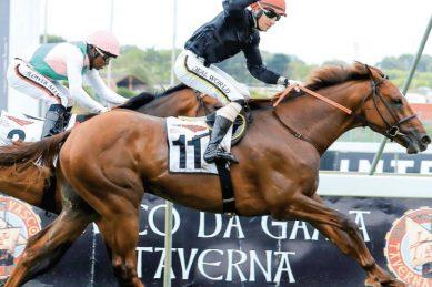 Golden Ducat, Princess Calla land plum draws for the Met