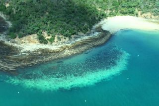 Great Barrier Reef suffers worst-ever coral bleaching: scientists - The Citizen