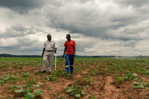 Two decades on, Zimbabwe takes stock of Mugabe land reform legacy