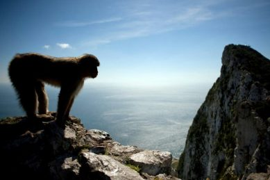 Gibraltar moves to protect its monkeys against coronavirus