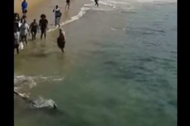 WATCH: Shark frenzy during sardine run