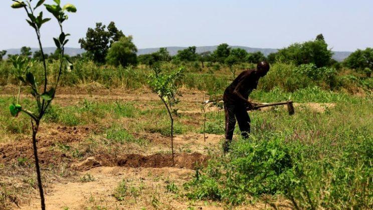 Gunmen kill at least 20 farmers in Sudan's Darfur
