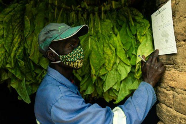 'Smoke that thunders': first 'made-in-Zimbabwe' luxury cigars