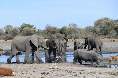 Mystery deaths of elephants in Botswana baffling scientists