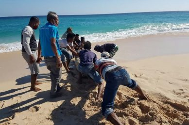 Ten dead whales found on Indonesian beach, one saved by locals