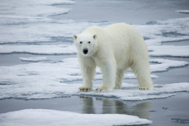 Human activity behind nearly all warming – study