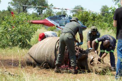 Over 50% decrease in rhino poaching, despite 'Covid-parole', says conservationist