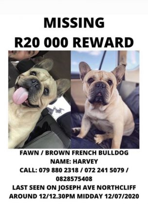 R20 000 if you can find a lost puppy!