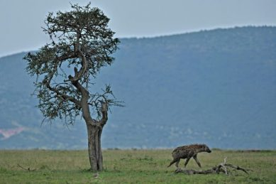 Kenya wildlife reserves threatened as tourists stay away