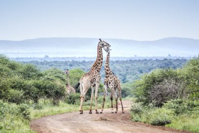 #Travelgram: Kruger National Park tops Instagram parks list