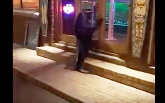 WATCH: Seal bangs at CT restaurant's door after crossing busy road