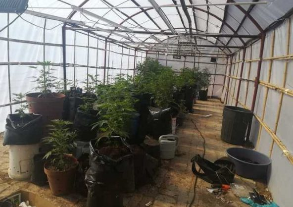 Daily news update: Covid-19 stats, dagga lab worth millions busted and SIU finds irregular PPE contracts