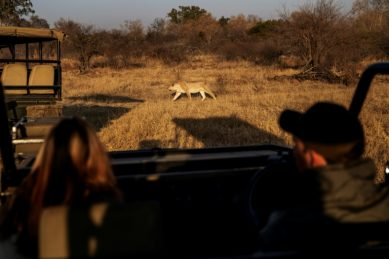 Local tours bring some relief to S.Africa safari industry
