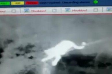 Still no sign of leopard after being spotted on CCTV footage inside Pretoria estate