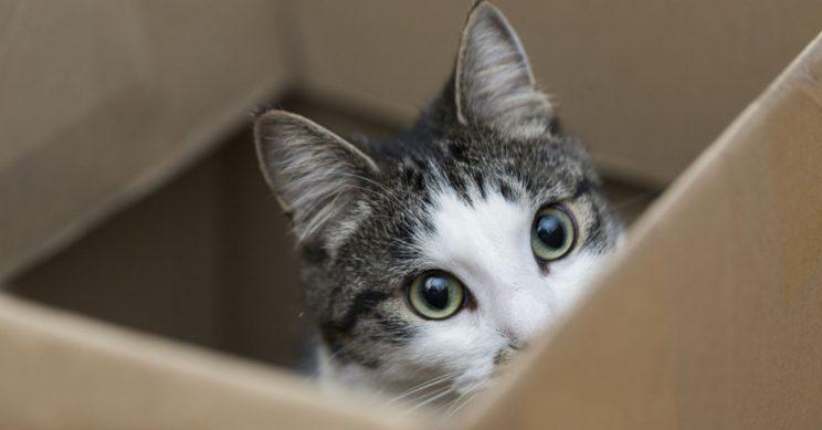Detained 'drug smuggler' cat escapes Sri Lanka prison