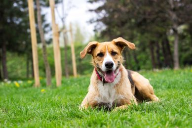 How to choose the right dog breed for your family: Crossbreeds