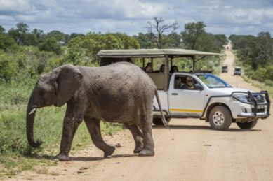SANParks 'exuberant' about gradual reopening