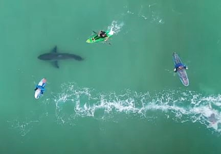 WATCH: Plet teen gets jaw-dropping footage of shark circling surfers